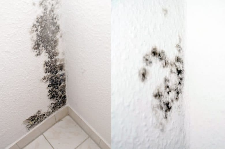 Can You Paint Over Mold in The Bathroom