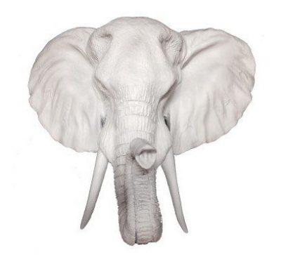 Fake White Elephant HeadFake White Elephant Head