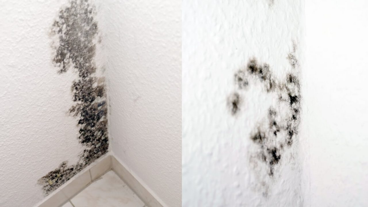 Can You Paint Over Mold In The Bathroom Decor Snob