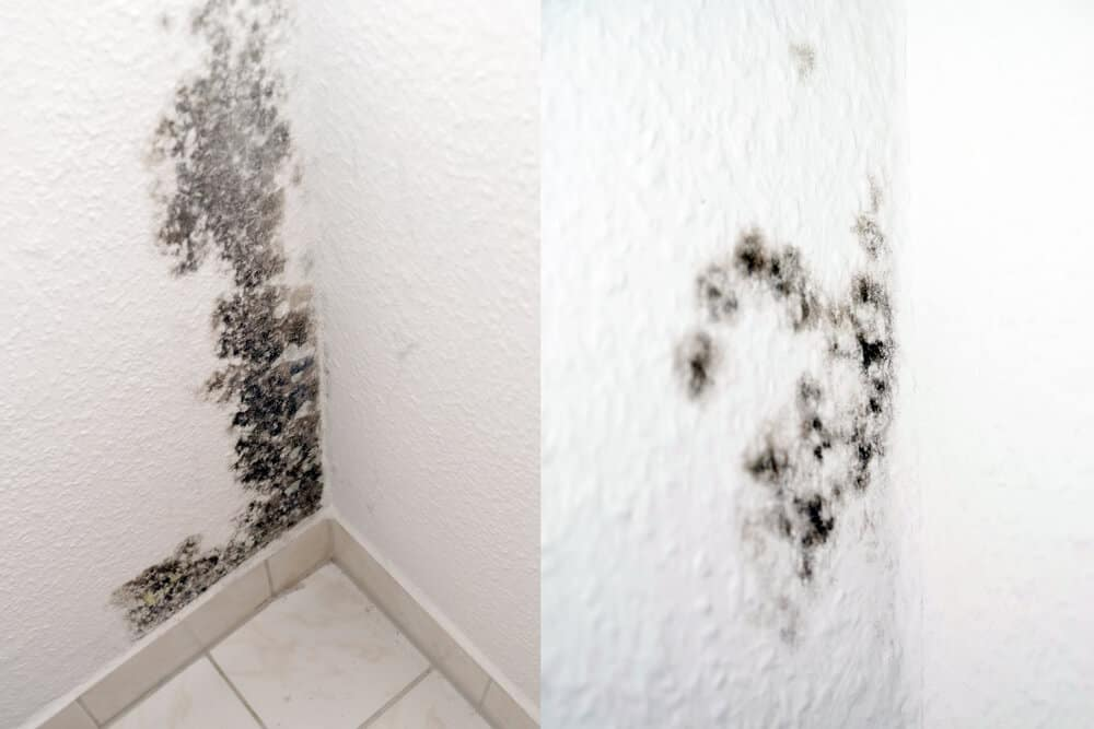Mold inside the bathroom