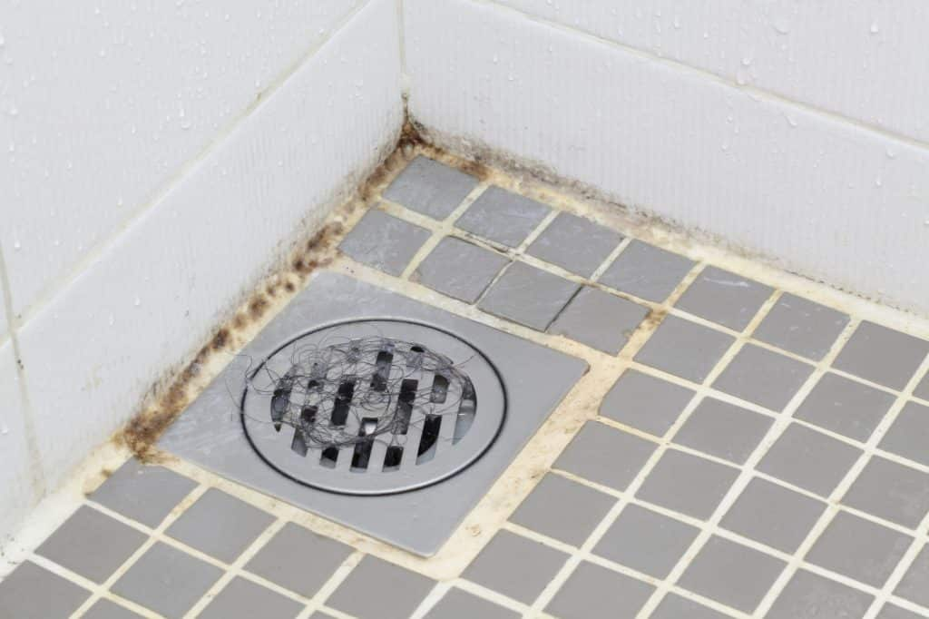 Is Shower Mold Dangerous