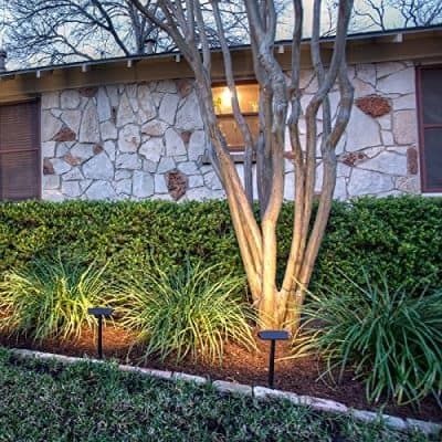 Lighting your Plants and Trees - landscape lighting ideas