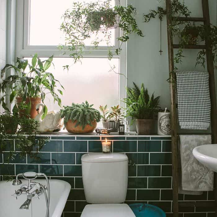 plants in bathroom